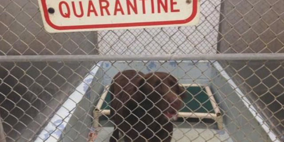Vet on the Set: New Rabies Quarantine Rules for Hawaii