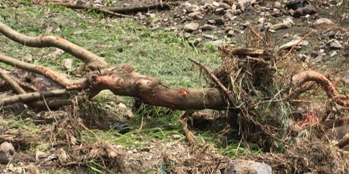 Floodwaters ruin East Oahu nursery for native plants