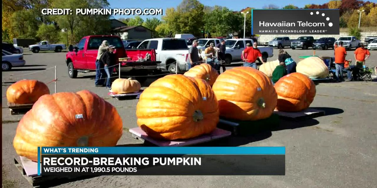 What's Trending: Photoshoot for 5-year-old battling cancer, Minnesota record-breaking pumpkin