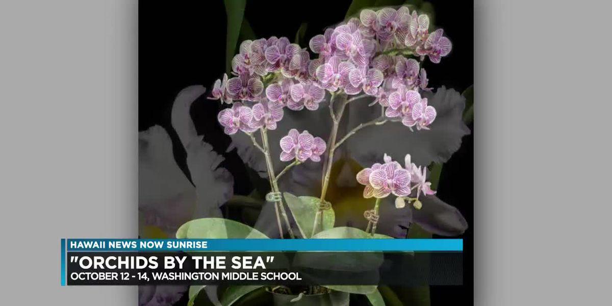 Kilauea eruption impact on orchid industry