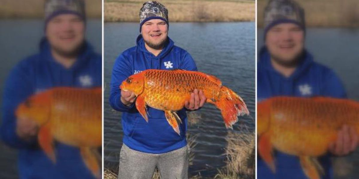 Fisherman reels in giant 'goldfish' from Kentucky pond