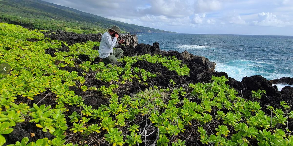 For 30 years, Haleakala was their office. Their mission: Saving native plants.