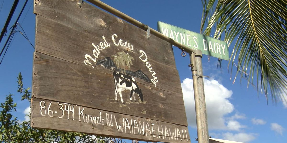 The 3 newborn goats reported stolen from a Waianae dairy have been returned