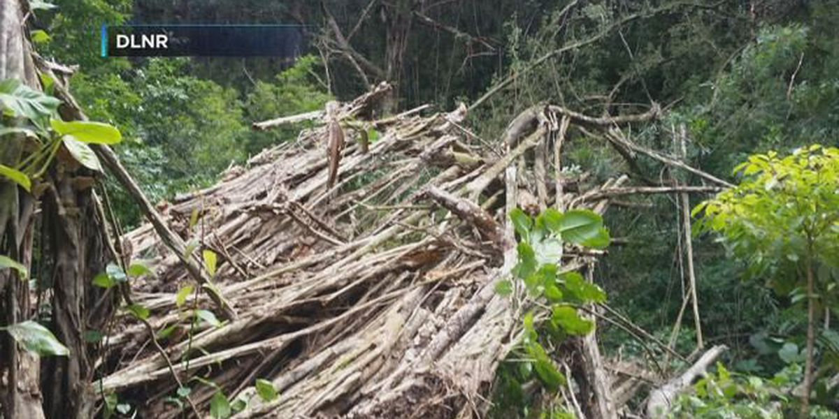 State closes Judd Trail after tree falls on hiker