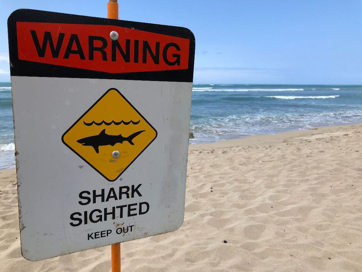 Maui beach reopens following shark bite that injured a man while kite foiling