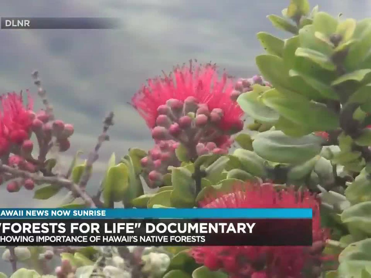 DLNR to debut documentary of Hawaii's native forests