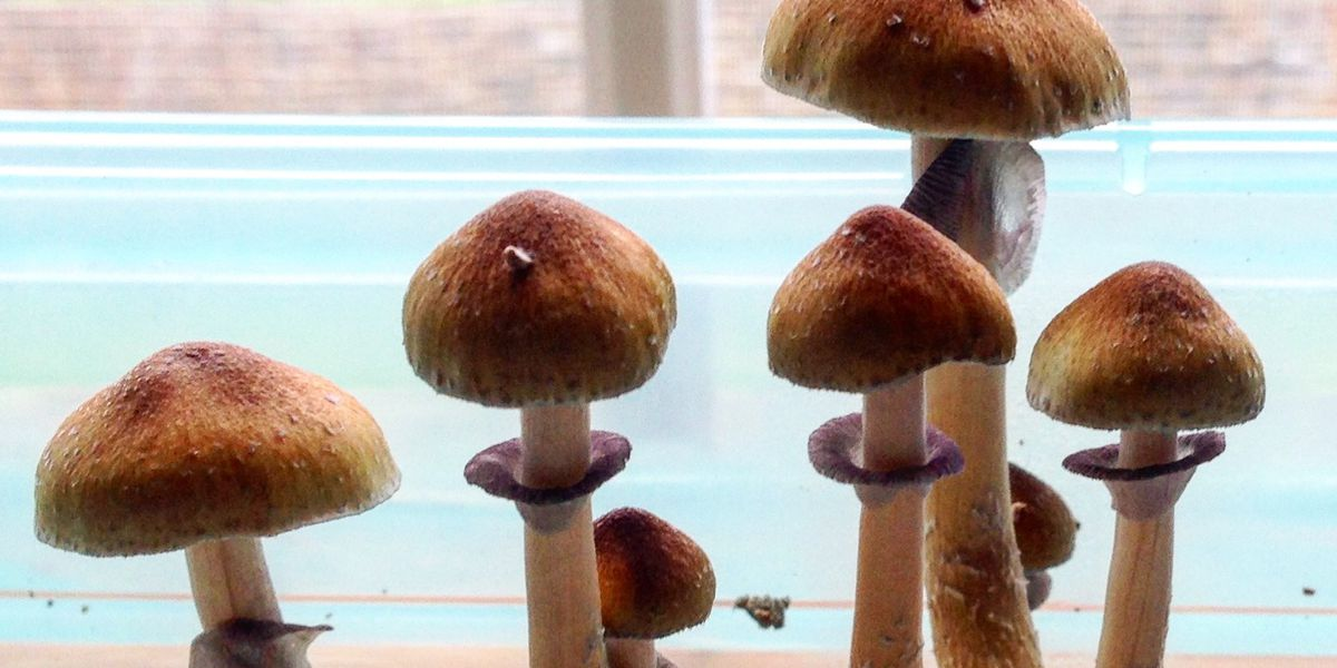 Cannabis is practically mainstream. Could 'mushrooms' be next?