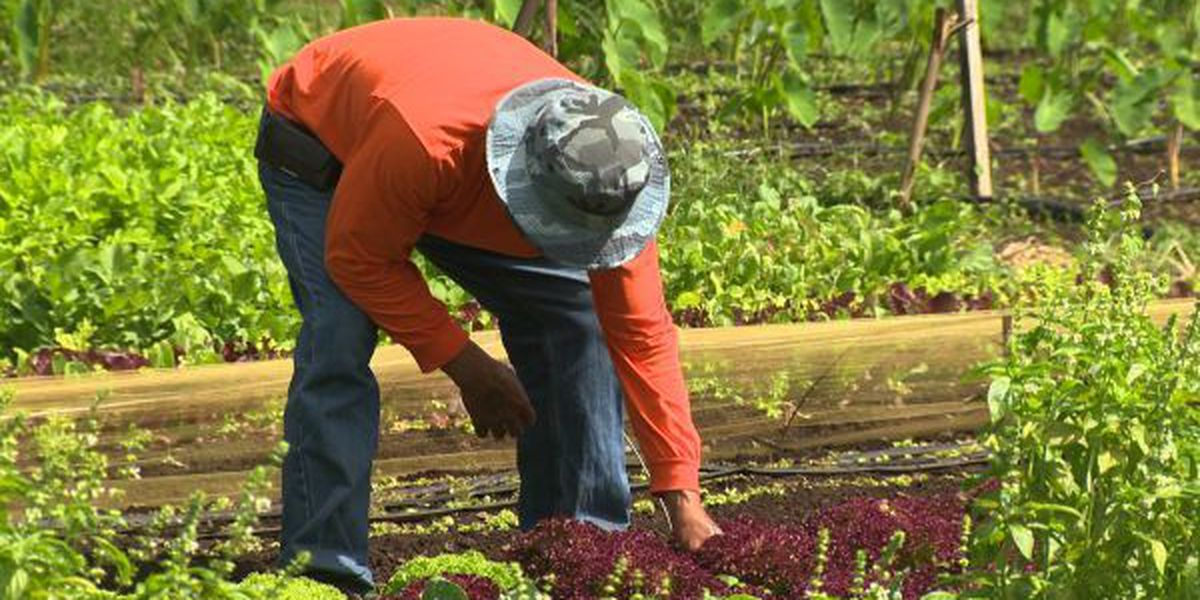 Hawaii plan would offset cost of organic farm certification