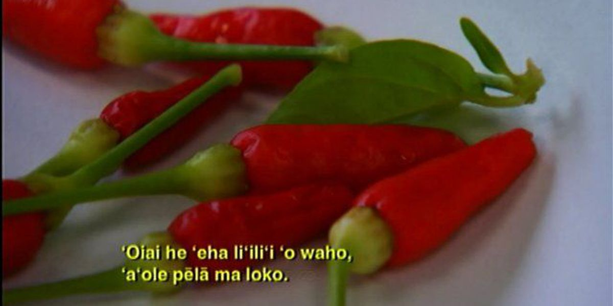 Hawaiian health practitioner's chili pepper cure