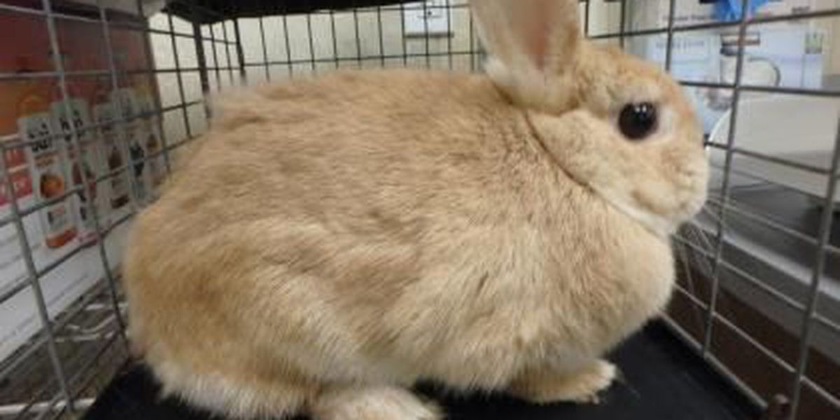 Humane Society: Maybe stick to chocolate bunnies if you're not ready for the real thing
