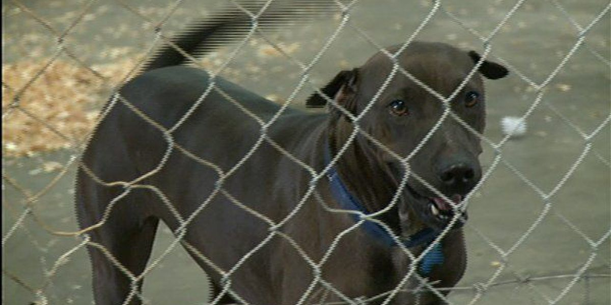 Beach sweeps leave animal shelter overrun with pets