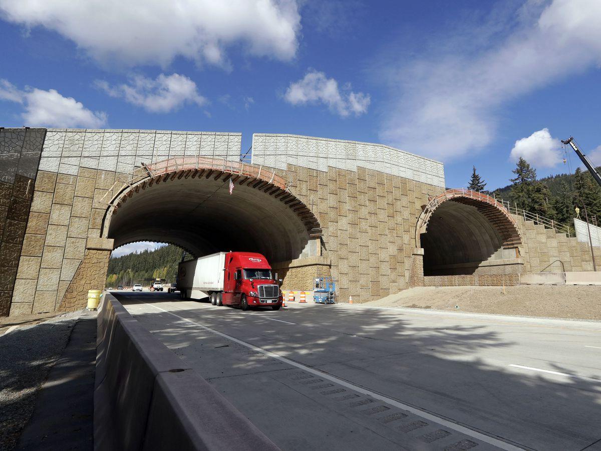 Washington state combats collisions with new wildlife bridge