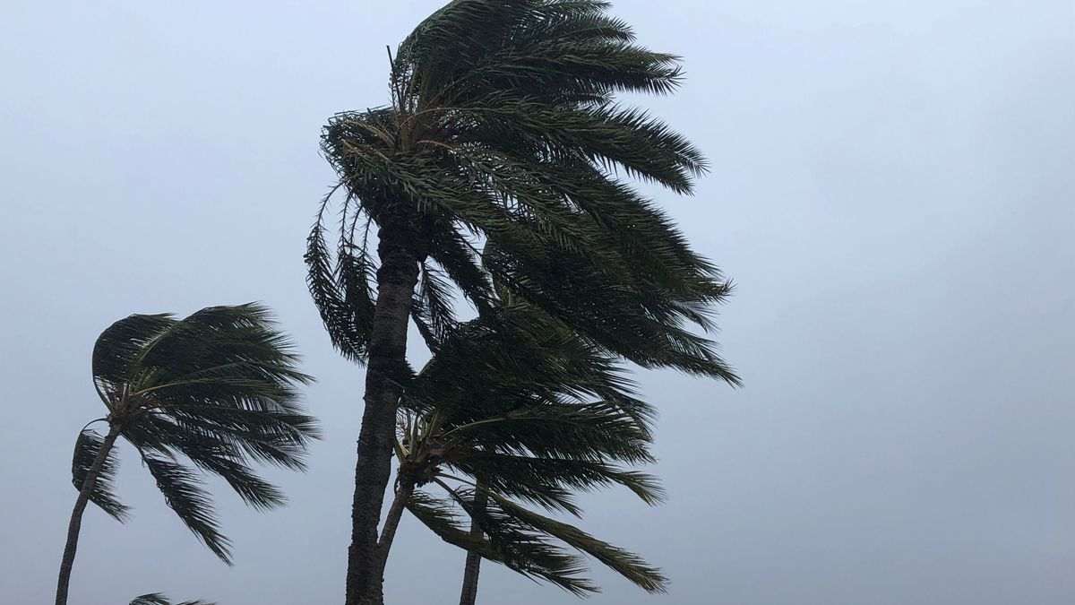 Wind advisory issued for strong gusty trades