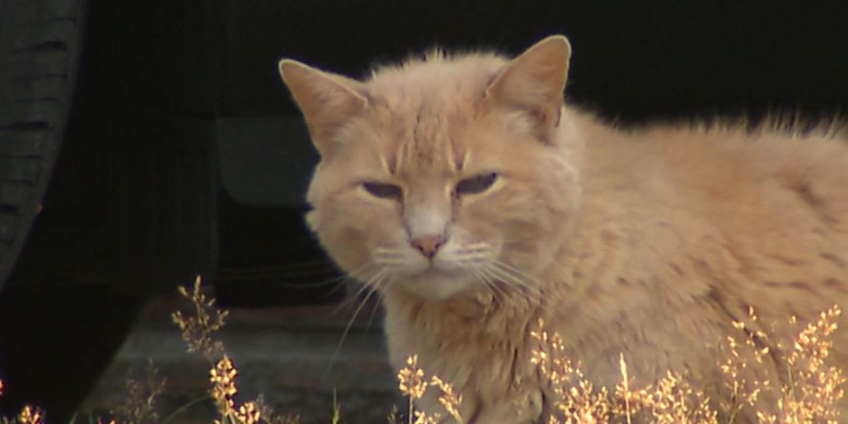 Police investigate string of cat killings, mutilations in Wash. city