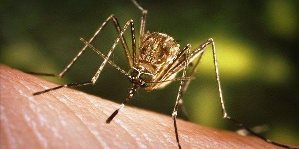 Big Island mayor declares state of emergency to address dengue fever outbreak