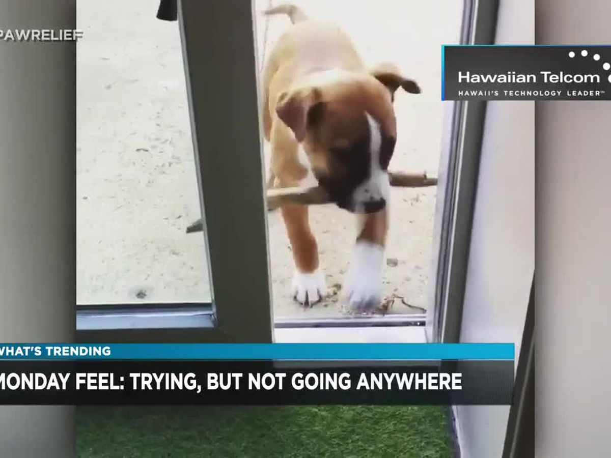 What's Trending: Penny the dog teaches lesson of determination