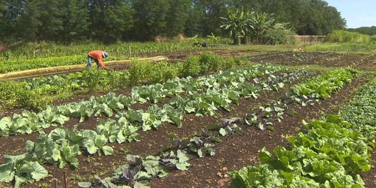 Kauai's program that gets produce to kupuna gets a funding boost
