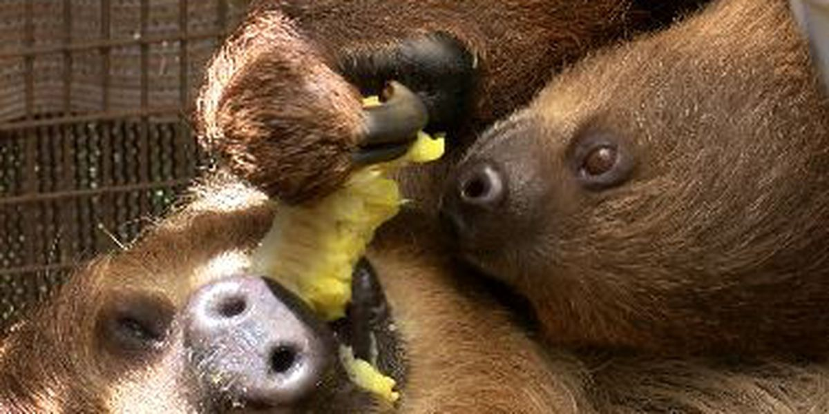 From cuddly to cold-blooded, the Honolulu zoo is enjoying a baby boom