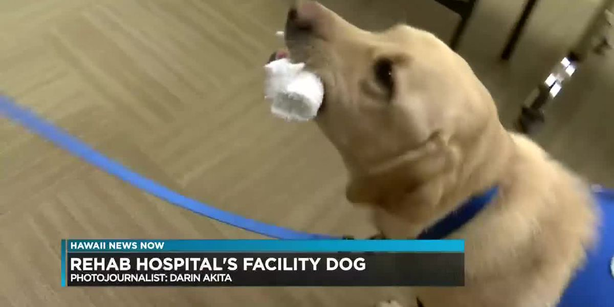 At rehab hospital, this four-legged friend offers his own brand of medicine