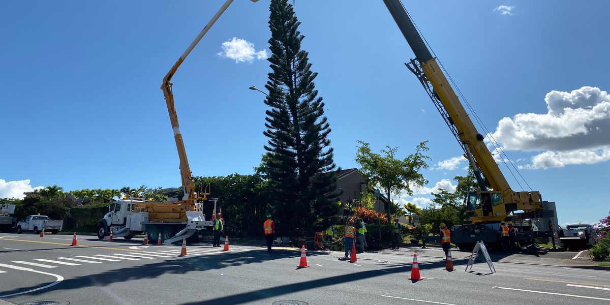Kapolei Hale, your 45-foot city Christmas tree is on its way!