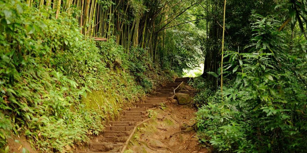 2 safe after spending night on Manoa Falls Trail