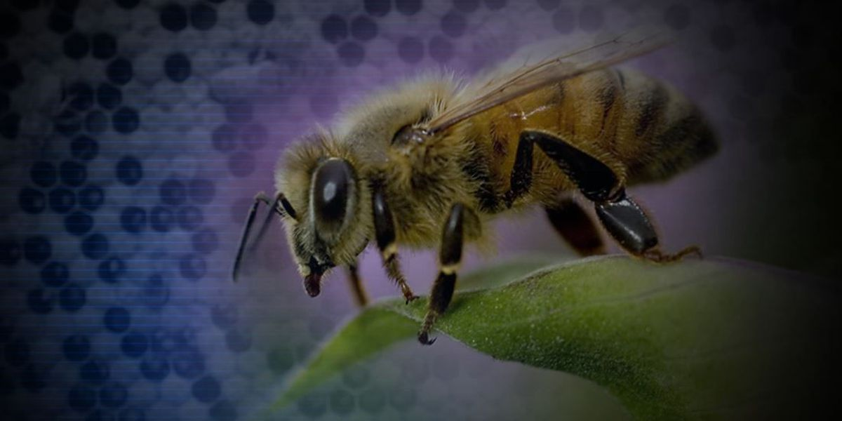 Beekeepers discuss keeping bees healthy at Haiku conference