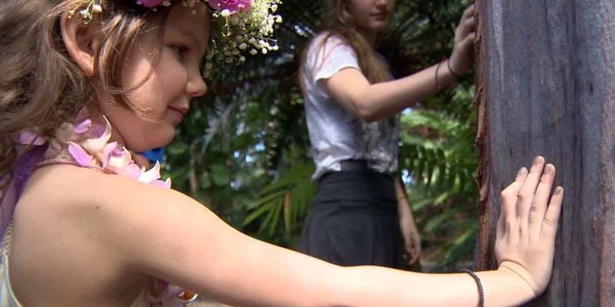 An Alaska girl gets her wish: To see a 'magical' Hawaii tree up close