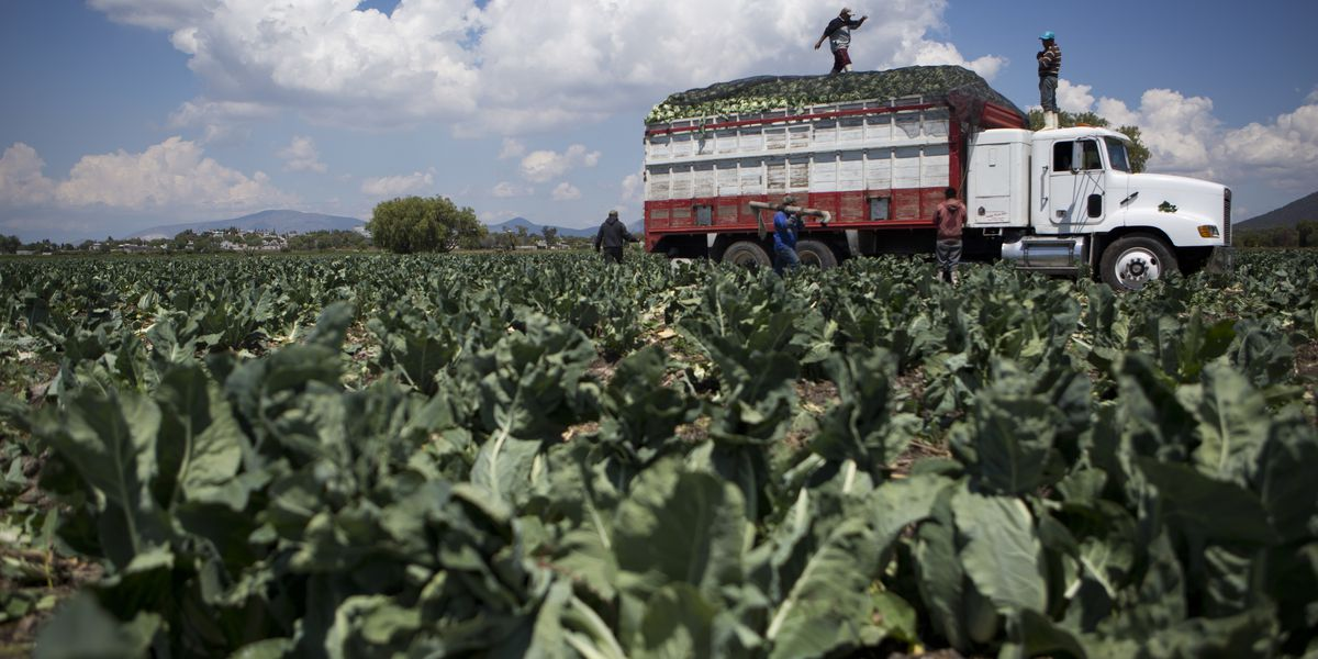 California farm recalls cauliflower following romaine lettuce recall