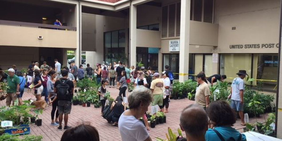 Ohia, Ti leaves and many more among free plants handed out in Manoa
