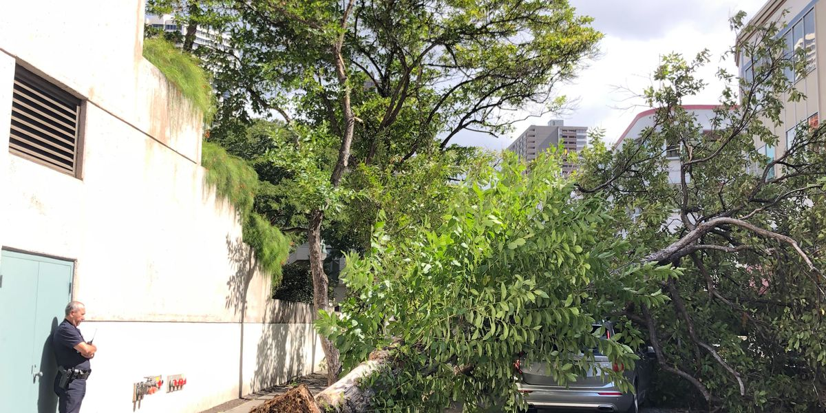 Large tree topples over onto 2 cars in Honolulu