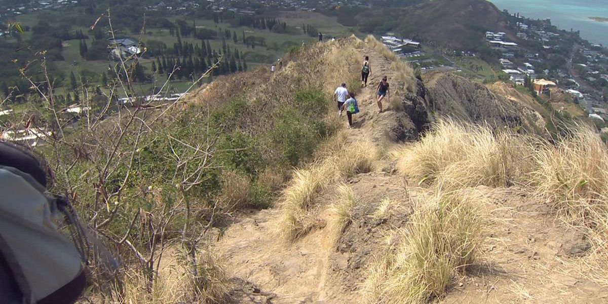 Popular Hawaii hikes can be dangerous for dogs ... and sometimes deadly