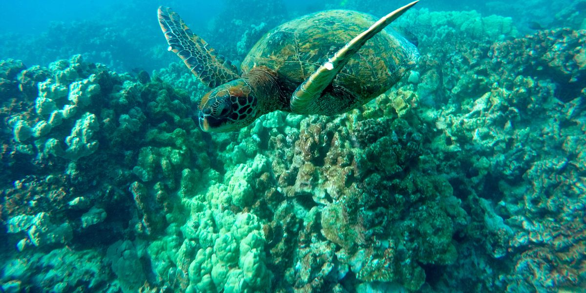 Report sounds an alarm on ongoing decline of US coral reefs