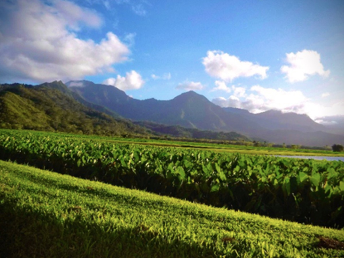 Hawaii Strong: A taro farm that's a fixture on Kauai turns to online sales to stay afloat