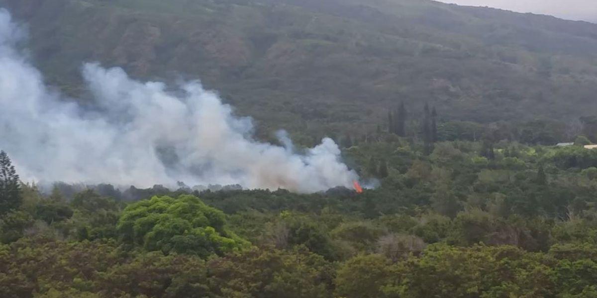 Fire scorches five acres in former Wailuku macadamia nut fields