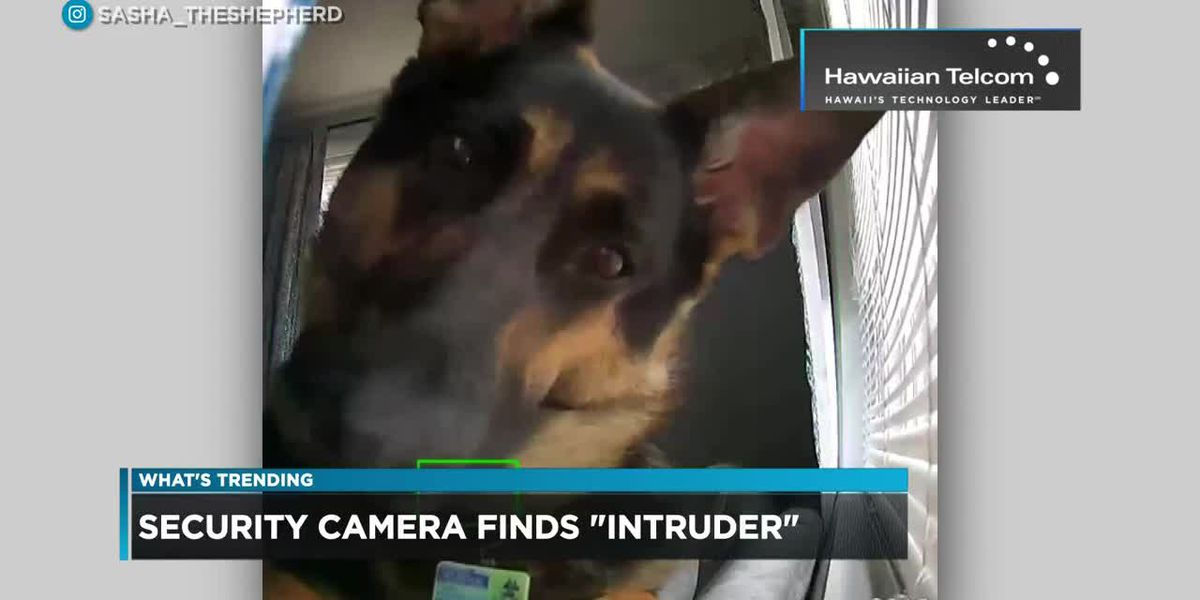 What's Trending: Home Security Finds Furry Intruder
