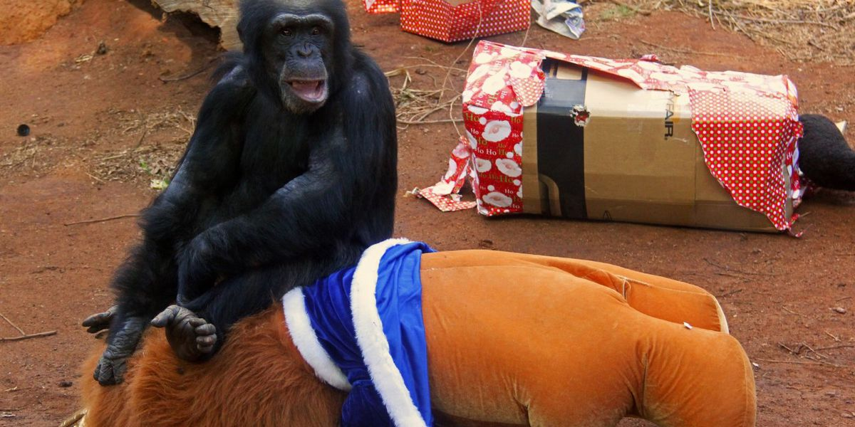 Honolulu Zoo animals to celebrate the holidays with presents of their own