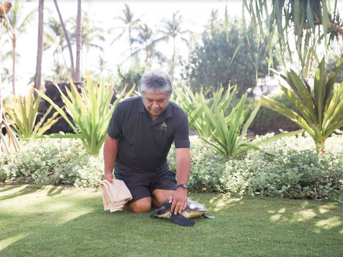 For 3 decades, the Big Island's 'Turtle Man' has been helping save endangered honu