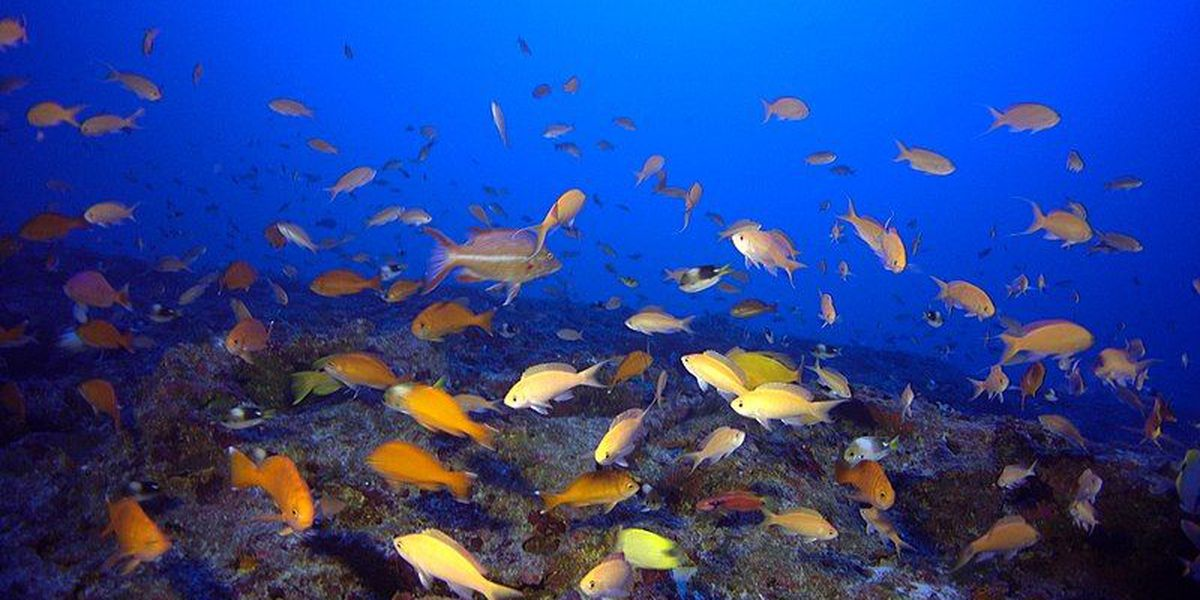 Hawaii reef fish collection slows following court ruling